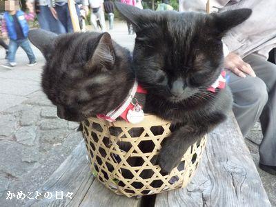 P1750722-cat.jpg