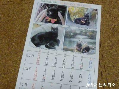 P1750777-cat2.jpg