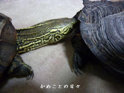 P1760239-sukeco.jpg