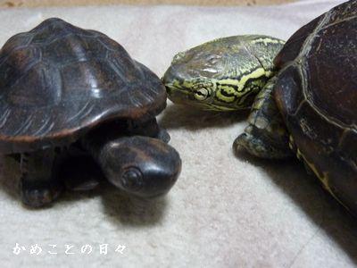 P1760325-suke.jpg