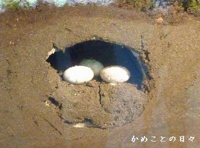 P1780265-egg.jpg