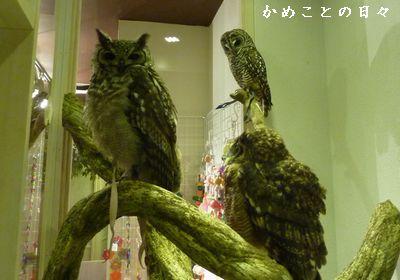 P1800074-owl.jpg