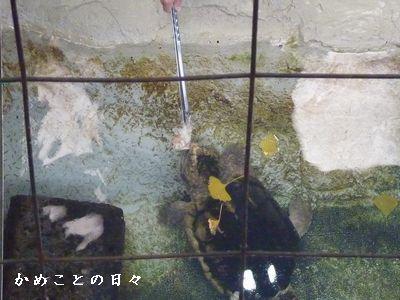 P1800423-wani.jpg