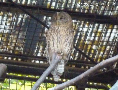 P1800569-owl.jpg