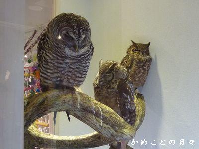 P1810908-owl.jpg