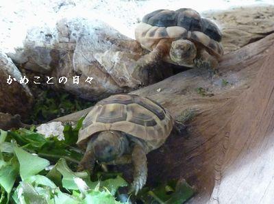 P1820763-zoo.jpg