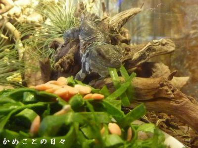 P1820811-zoo.jpg