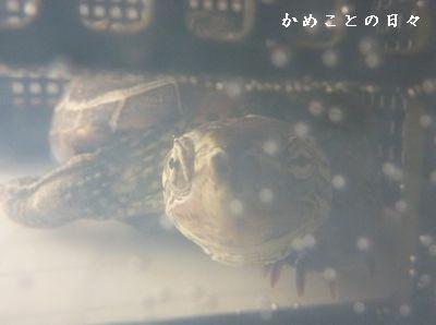 P1820843-suke.jpg
