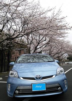 01PHV桜