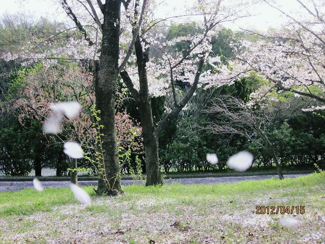 万博公園花見1