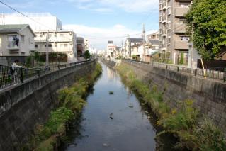 今井橋より下流を望む