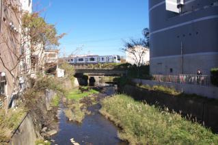 浦賀道(鎌倉):延命寺橋より滑川上流を望む