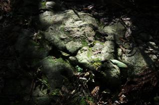 浦賀道(鎌倉):名越切通・足元の岩肌
