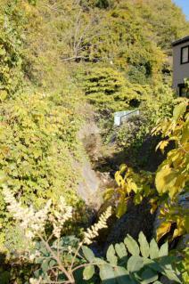 浦賀道(戸塚):県道より大沢谷川上流を望む
