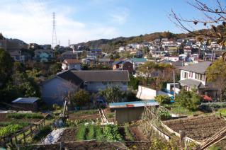 浦賀道(戸塚):椚林の尾根筋からの眺め-1