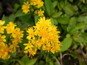 DSCN0580_黄色い花