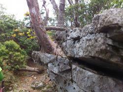 岩から木2