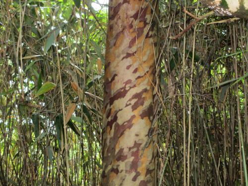 きりんの木