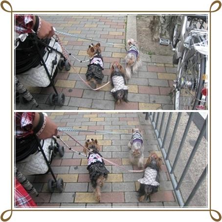 4cats_20120513205716.jpg