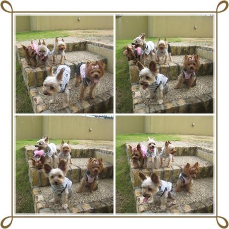 5cats_20120819231521.jpg
