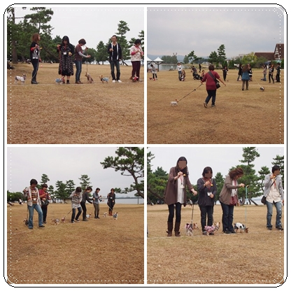 8cats_20121103102859.jpg