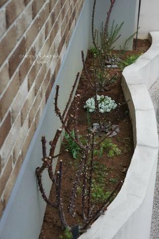 玄関側の花壇
