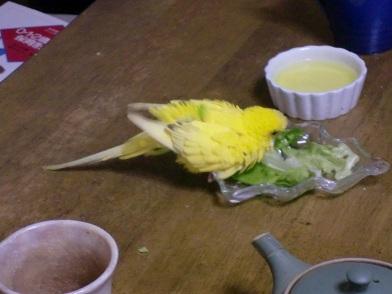 お野菜浴び3