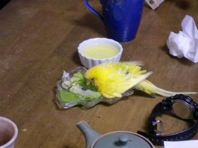 お野菜浴び1