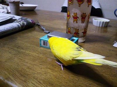 黄色いの!