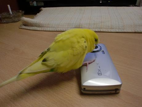 携帯さん、久しぶり!