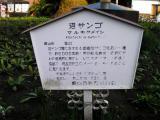 JR館山駅 沼サンゴ マルキクメイシ 説明