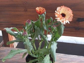 98円の花