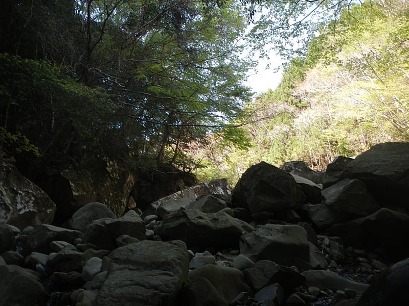 渓流の様子