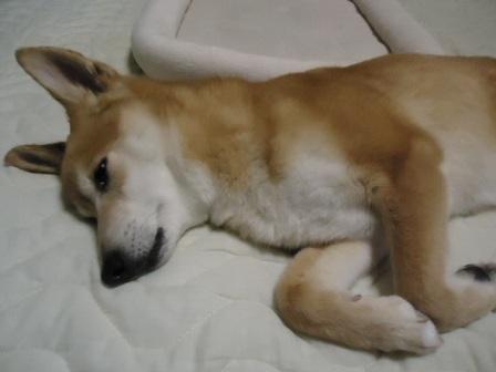 ベッドで2
