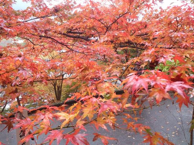 2014-11-12-12-40-12_photo (640x480)