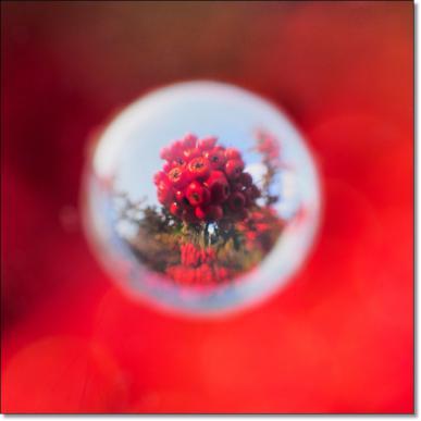 赤い実-1