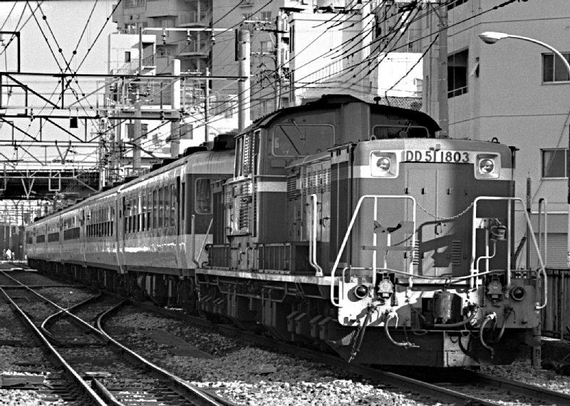 DD511803_shirakaba.jpg