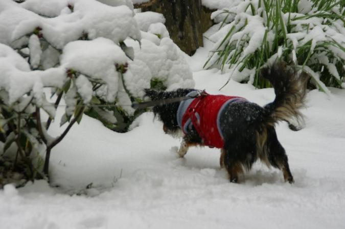 DSC00875雪アブー
