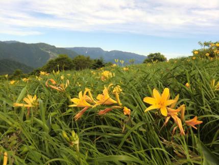 三国山のお花畑
