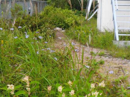 フェンスの中の花畑1