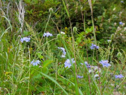 フェンスの中の花畑2