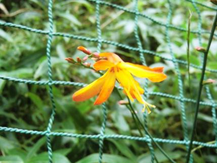 この花は・・・?