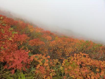 山頂下の紅葉