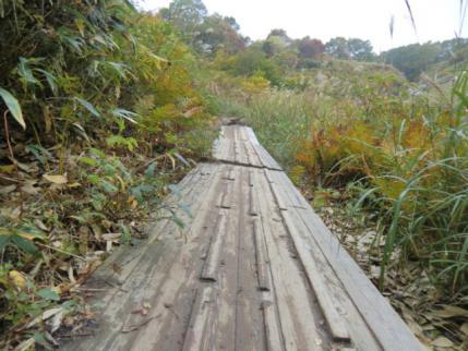 斜めってる木道