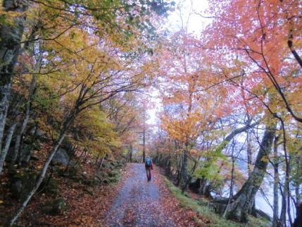 湖畔の紅葉の道
