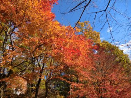 紅葉真っ盛りの城峯公園
