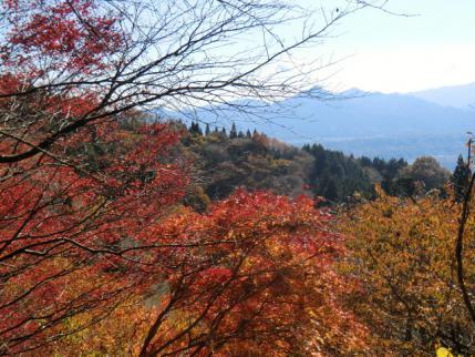 紅葉と後方に武甲山