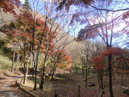 城峯山キャンプ場の紅葉