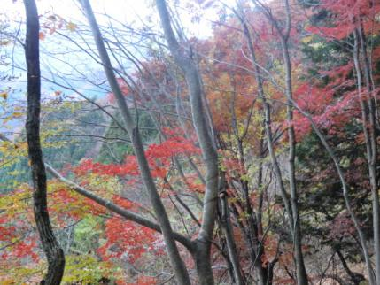 登山口近くの紅葉