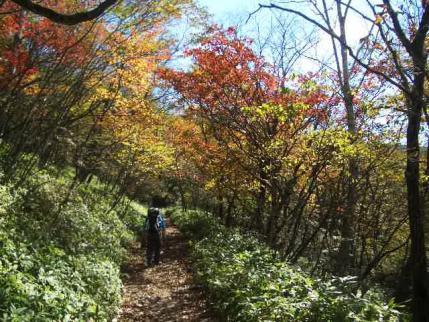 長七郎への紅葉の道